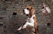 stock photo of stray dog  - Stray dog before an old brick wall - JPG