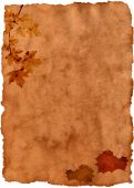 foto of grape-vine  - Grungy old paper decorated with autumn leaves - JPG
