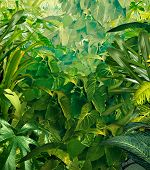 stock photo of tropical rainforest  - Tropical jungle background with rich green plants as rich fauna as ferns and palm tree leaves found in rain forest warm environments in southern hot climates as south America Hawaii and Asia - JPG