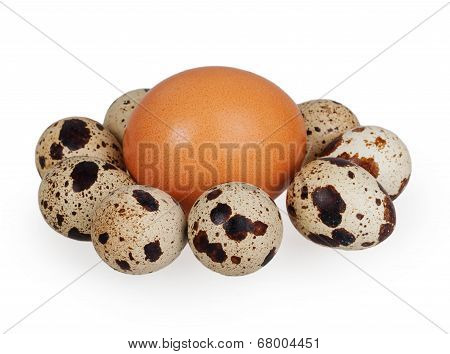 One Egg And Quail Eggs