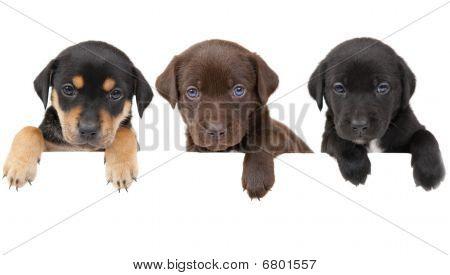Bandera de cachorros