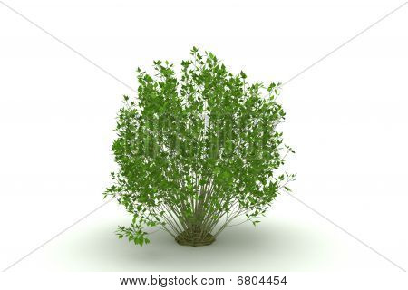 green bush isolated on white background with shadow