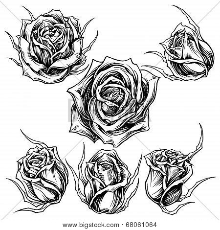 Roses vector set