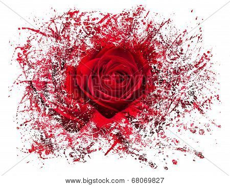Close Up Of Red Rose Exploding
