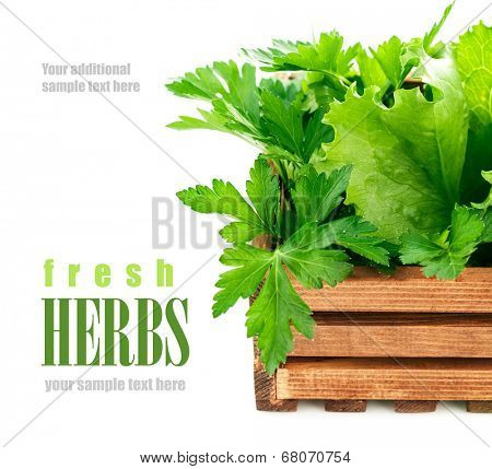 Fresh herbs in wooden box. Isolated on white background