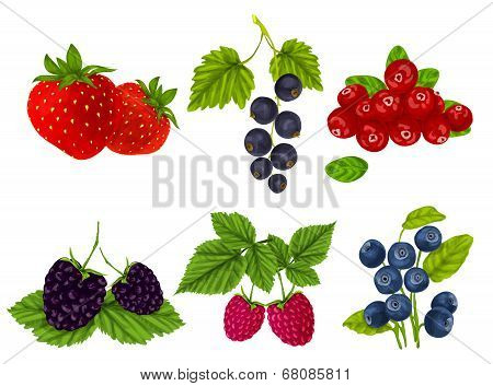 Fresh berries set