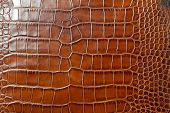 pic of alligator  - Genuine vintage brown alligator leather texture background - JPG