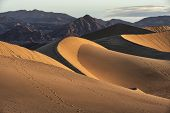 stock photo of mesquite  - Mesquite Flat Sand Dunes - JPG