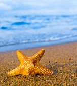 picture of starlet  - In a Paradise Far from Home Sea Starlet  - JPG