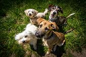image of spotted dog  - 4 dogs sitting in one spot and look for photographers high holding some fine reward in the hands Weiwinkel recording - JPG