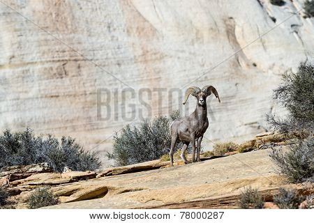 Ram In Zion Np