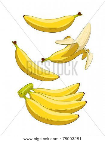 Banana. Tropical fruit. Set of  Eps10 vector illustrations. Isolated on white background