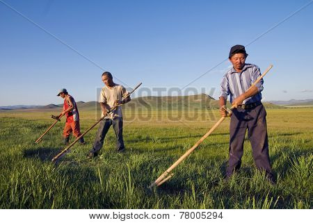 Three Mongolian farmers working hard.