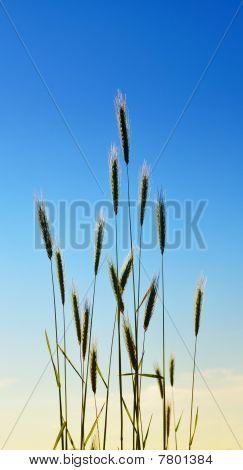 Elegant wild grass