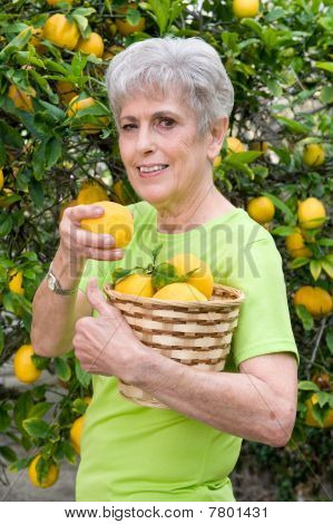 Adult Picking Lemons From Tree