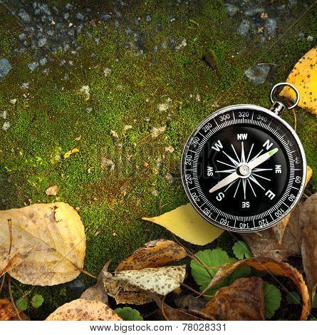 Compass On Autumn Foliage
