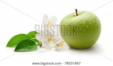 Green Apple And Flower