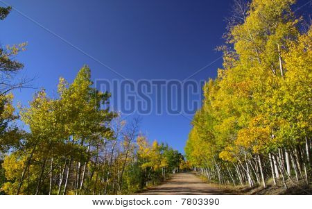 Scenic drive through Aspens