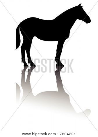 Horse standing silhouette reflection vector