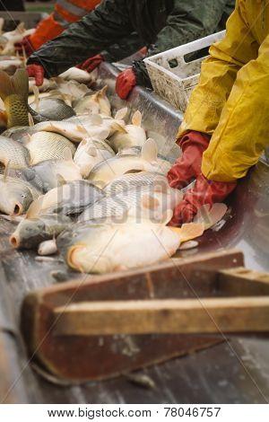 Fisherman at Work/Fishing Industry