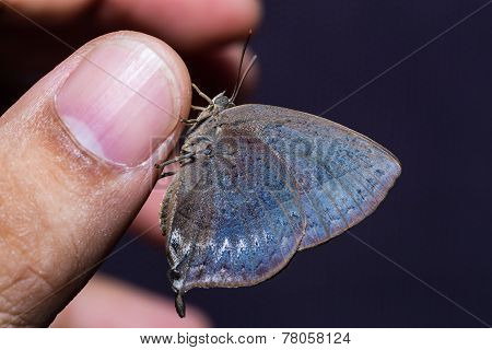 Purple Leaf Blue Butterfly