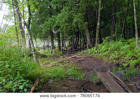 Forest Trail Crossing Stream At Jay Cooke