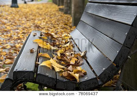 Wet Wooden Bench