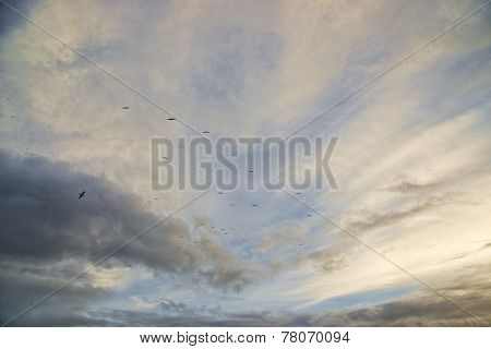 Cloudy Sunset With Birds In The Sky