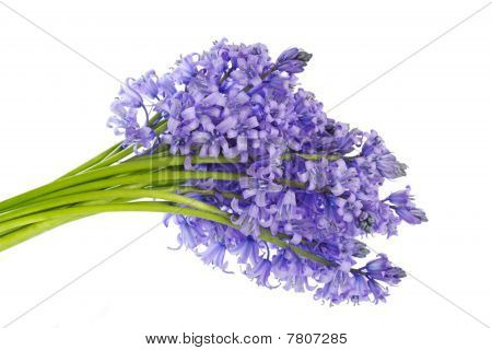 Bluebell Bouquet