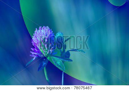 Abstract Clover Flower Blue