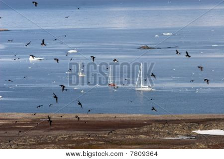 Yachts on Arctic sea
