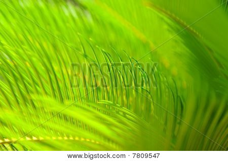 Close Up Of Bright Green Palm Tree Leaves