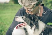 stock photo of sheep-dog  - concept about love for animals - JPG