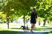 picture of greyhounds  - Young attractive girl  walking with two greyhounds in the park - JPG