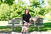 foto of greyhounds  - Young attractive girl sitting on the bench with two greyhounds in the park - JPG