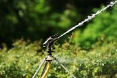 foto of water shortage  - Watering with a sprinkler in a botanical garden - JPG