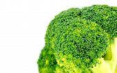 foto of cruciferous  - Closeup of organic green broccoli floret with white copyspace - JPG