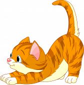 foto of red hair  - Cute red hair Cat stretching against white background - JPG