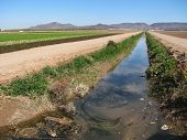 pic of e coli  - polluted irrigation ditch in the imperial valley southern California - JPG