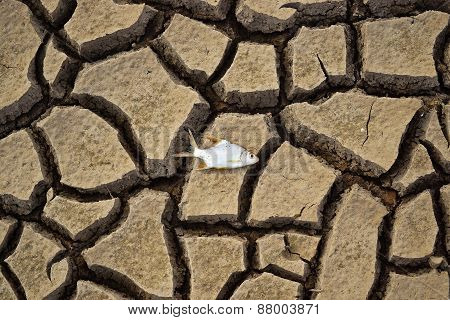 Drought - river dried up