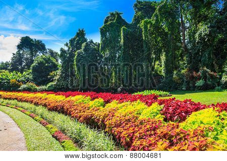 Multicolored Alley Of Flowers And Trees