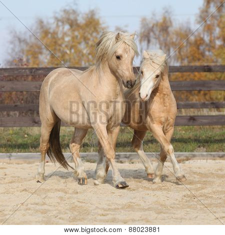 Two Amazing Stallions Playing Together