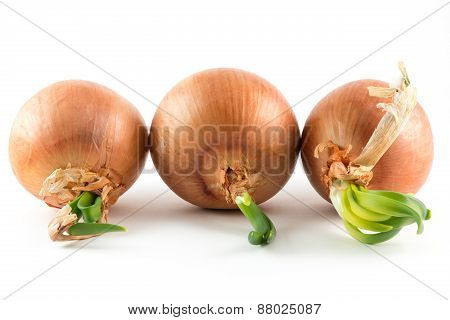 Onions On White