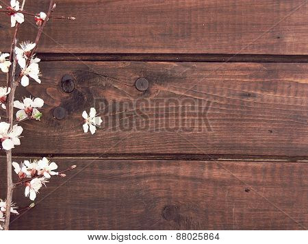 Blooming Apricot On Rustic Wooden Background. Spring Background With Blossom Apricot Branches