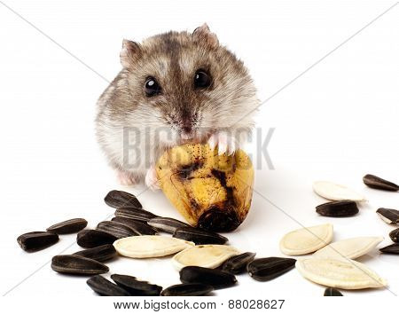 hamster holding a old banana