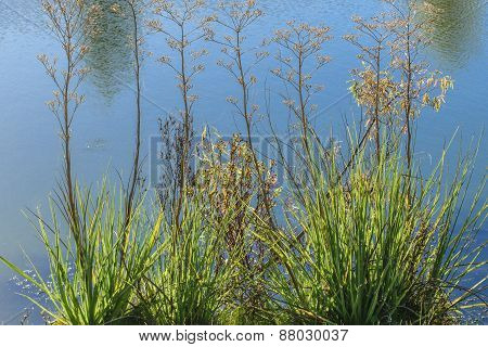 Plants and lake detail