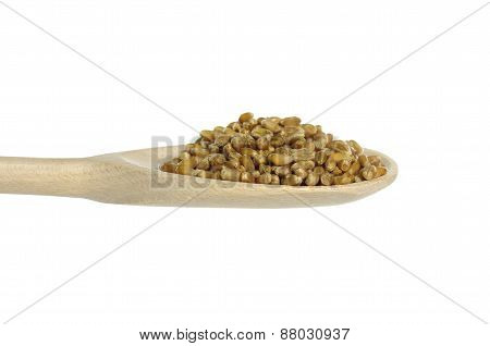 Corn Cereal On Spoon