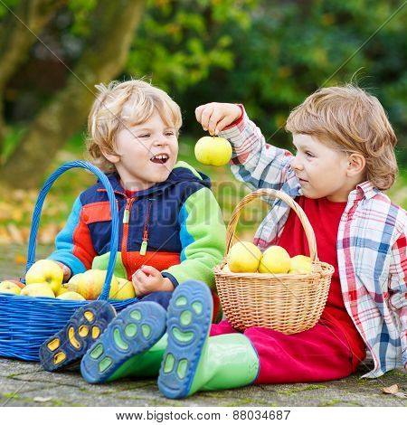 Two Adorable Little Boy Friends Eating Apples In Home's Garden, Outdoors