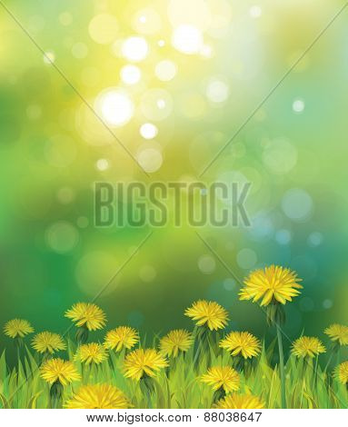 Vector spring yellow dandelions.