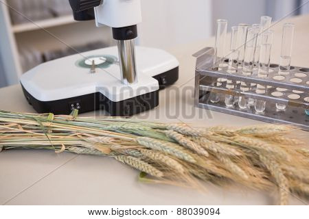 Microscope with tubes and sheaf in the laboratory